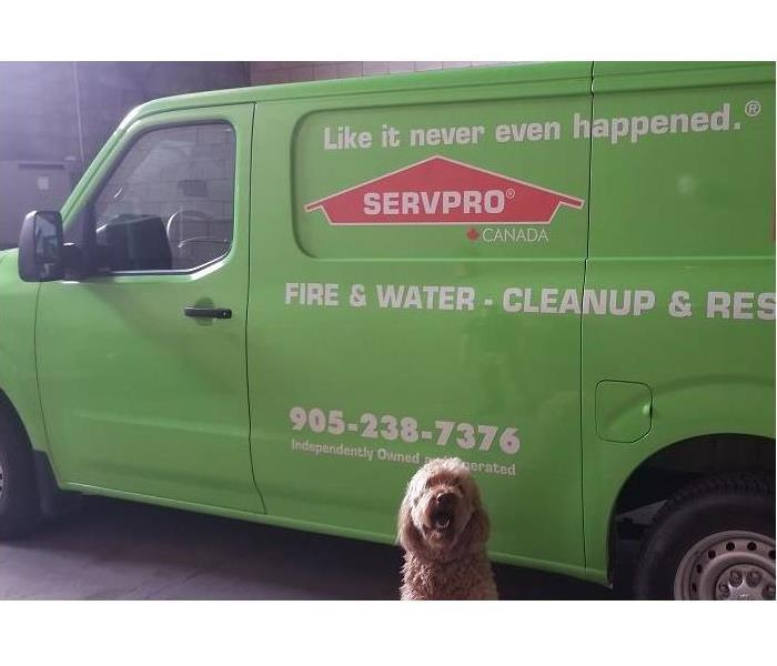 dog sitting in front of SERVPRO van