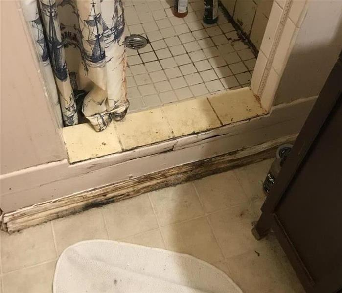 mold infested shower stall and trim